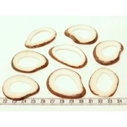 Tagua donut blanc x1