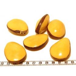 Tagua graine bombée jaune x1