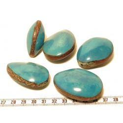 Tagua graine bombée bleu x1