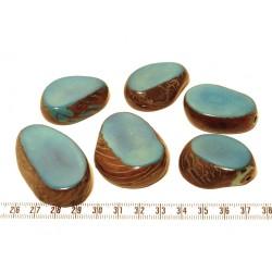 Tagua tranche bleu x1