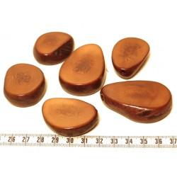 Tagua tranche marron x1