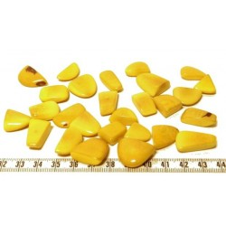Gelbe große Steingärten Tagua X 1