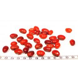 Rote ewige Augenbohnen X 1