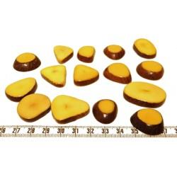 Tagua lame épaisse petite jaune x1