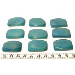 Tagua plaque bleu x1