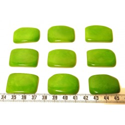 Tagua plaque vert x1